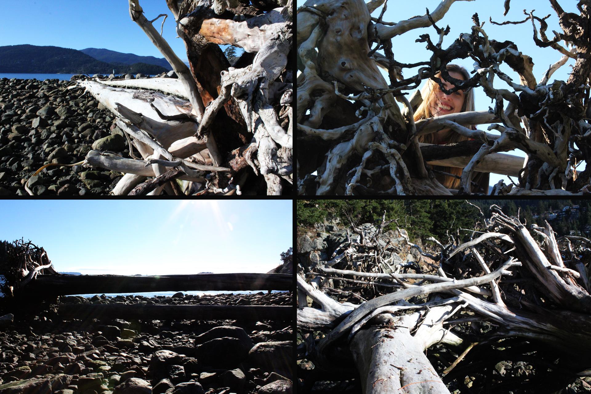 love logs
